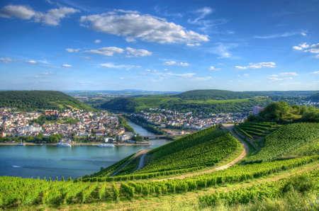 Vineyard near Burg Ehrenfels, Ruedelsheim, Hessen, Germany Stok Fotoğraf