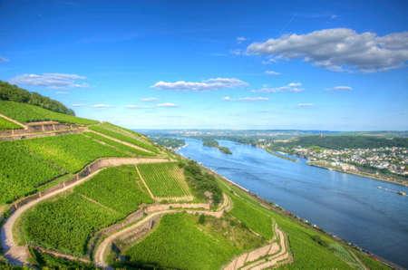 Weinberg in der Nähe von Burg Ehrenfels, Ruedelsheim, Hessen, Deutschland