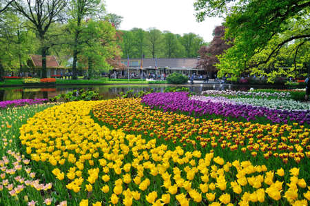 Pink, yellow, purple and white tulips in Keukenhof park in Holland Editorial