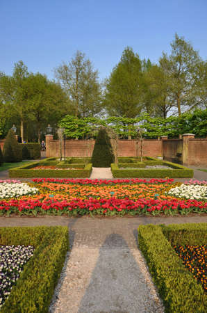Garden with small bushes, white, orange and red tulips in Keukenhof park in Holland