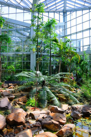 knocked out: Jungles in Palmen Garten, Frankfurt am Main, Hessen, Germany Editorial