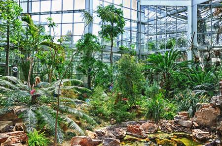 garten: HDR Jungles in Palmen Garten, Frankfurt am Main, Hessen, Germany