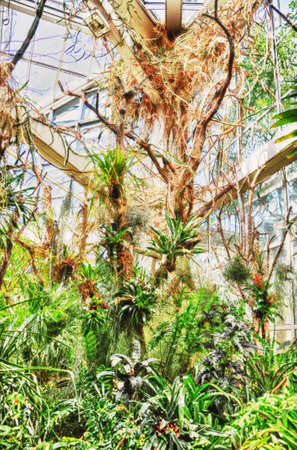 knocked out: Selvas HDR en Palmen Garten, Frankfurt del Meno, Hesse, Alemania