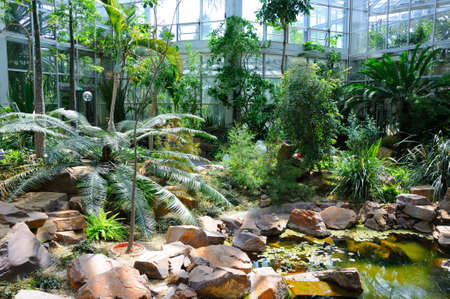 garten: Jungles in Palmen Garten, Frankfurt am Main, Hessen, Germany Stock Photo
