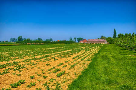benelux: Field with young fresh sprouts in spring on sunny day, countryside in Belgium, Benelux, HDR