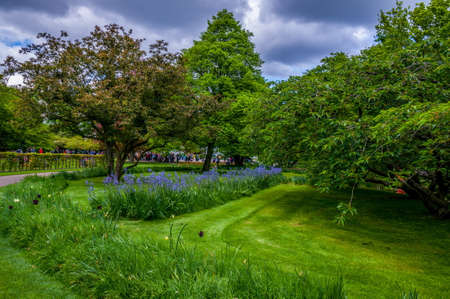 folliage: Green meadow with trees and blue flowers, Keukenhof Park, Lisse in Holland. Stock Photo