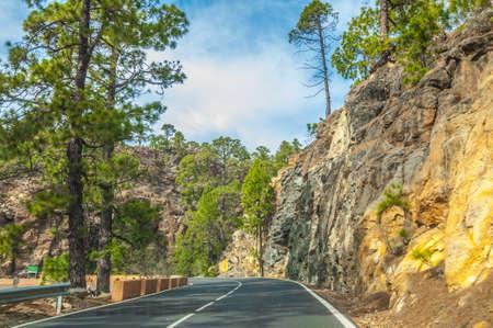 Straße entlang der kanarische Kiefern in Forestal Naturpark, Teneriffa, Kanarische Inseln
