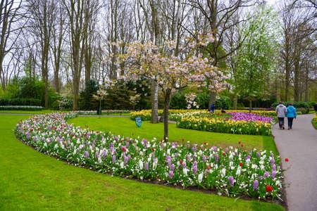 Blühender Apfelbaum und Tulpen im Keukenhof, Lisse, Holland, Niederlande. Lizenzfreie Bilder
