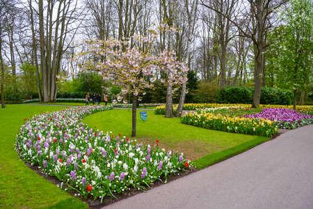 Blooming apple tree and tulips in Keukenhof park, Lisse, Holland, Netherlands.