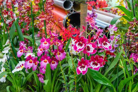 Beautiful orchids in Keukenhof park, Lisse, Holland Netherlands Lizenzfreie Bilder