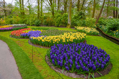 Frische Frühjahr rosa, lila, weiße Hyazinthen Glühbirnen. Blumenbeet mit Hyazinthen im Keukenhof, Lisse, Holland, Niederlande. Lizenzfreie Bilder