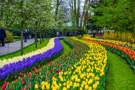 Tuilps and other flowers in Keukenhof park, Lisse, Holland, Netherlands Lizenzfreie Bilder