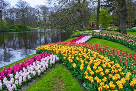 Frische Frühjahr rosa, lila, weiße Hyazinthen Glühbirnen. Blumenbeet mit Hyazinthen im Keukenhof, Lisse, Holland, Niederlande