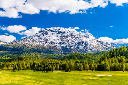 Green fields and Alps mountains coevered with forest, Samedan, Maloja, Graubuenden, Switzerland