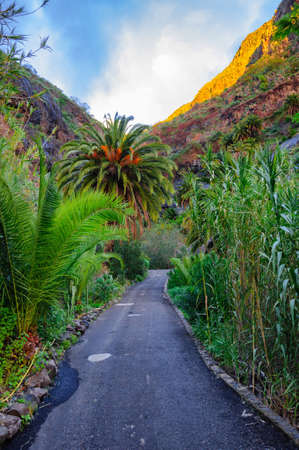 Palms with a road near Masca village with mountains, Tenerife, Canarian Islands