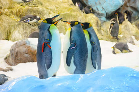 Big King penguins in Loro Parque, Tenerife, Canary Islands