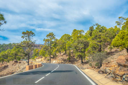 Road along the canarian pines in the Corona Forestal Nature Park, Tenerife, Canary Islands. Stock Photo