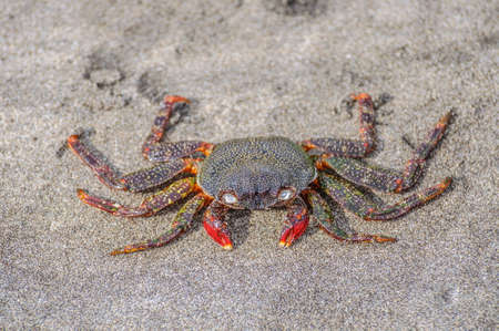 Crab sitting on the sand on the beach