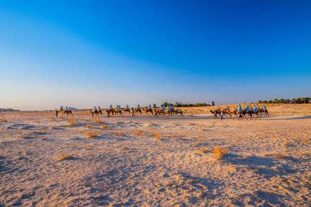 Camels caravan going in sahara desert in Tunisia, Africa.