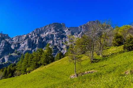 Field with trees in Swiss Alp mountains, Leukerbad, Leuk, Visp, Wallis, Valais Switzerland Standard-Bild - 133544722
