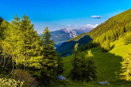 Pine trees and forest in Alp mountains, Martigny-Combe, Martigny, Wallis, Valais, Switzerland Standard-Bild - 133544743