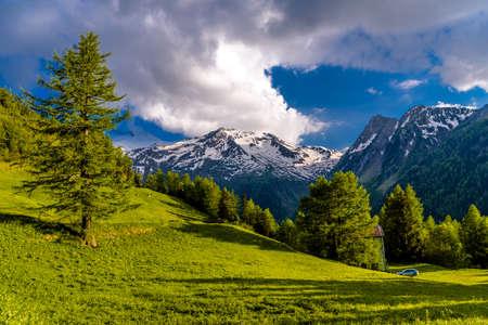 Pine trees in fields in Alp mountains, Martigny-Combe, Martigny, Wallis, Valais, Switzerland Standard-Bild - 133544781