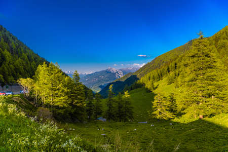 Pine trees and forest in Alp mountains, Martigny-Combe, Martigny, Wallis, Valais, Switzerland Standard-Bild - 133544981