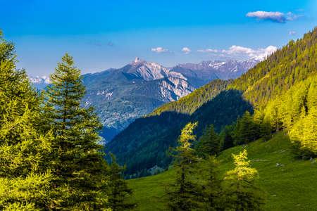 Pine trees and forest in Alp mountains, Martigny-Combe, Martigny, Wallis, Valais, Switzerland Standard-Bild - 133544983