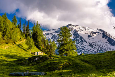 Pine trees in fields in Alp mountains, Martigny-Combe, Martigny, Wallis, Valais, Switzerland Standard-Bild - 133545037