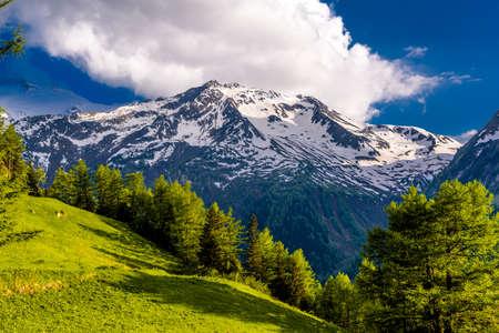 Pine trees in fields in Alp mountains, Martigny-Combe, Martigny, Wallis, Valais, Switzerland Standard-Bild - 133545036