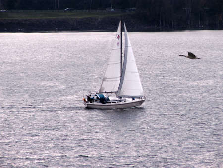Goose flying over river with sailboat in late Fall.