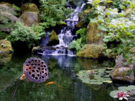 Pond Distel im Vordergrund mit heiteren Szene Wasserfall im Hintergrund, Lilien und unten rechts.  Standard-Bild - 270625