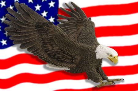 독수리는 미국 국기를 휩쓸고 지나간다.