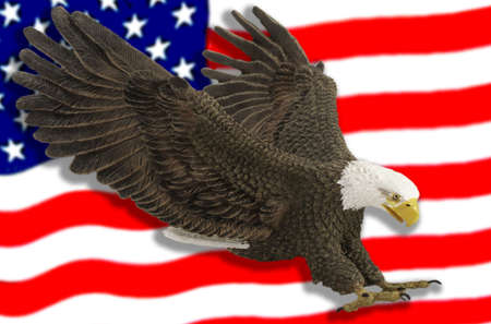 Eagle swoops across the American flag.