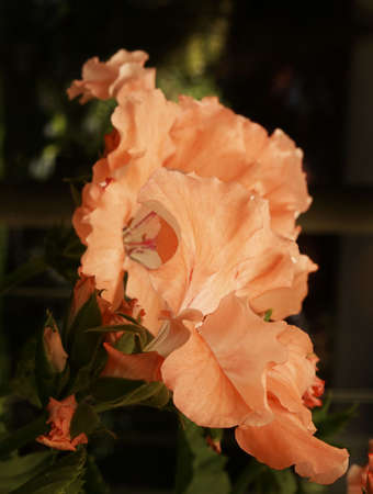 Beautiful orange bloom on hanging basket flower.
