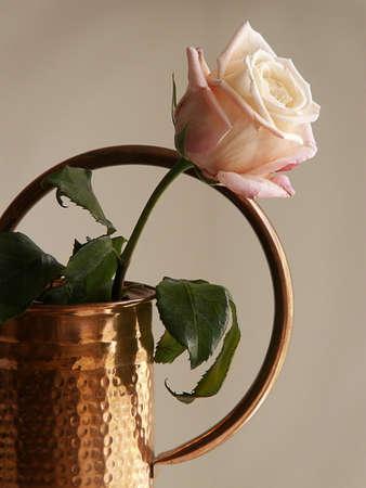 ambrosial, beauty, bloom, blossom, botanical, bountiful, bouquet, exquisite, floral, flourish, flowers, fragrant, garden, grow, love, lovely, nature, open, orange, pastel, peach, petal, plant, pleasing, romance, rose, smell,