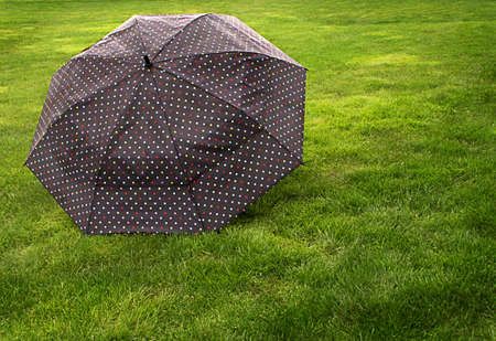 Large black umbrella with colored poka dots sits on lush green lawn.