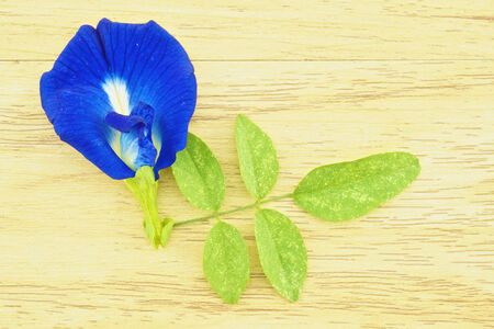 colorant: Asian Pigeonwings or Clitoria ternatea is a violet flowers with green leafs on wood background. Stock Photo