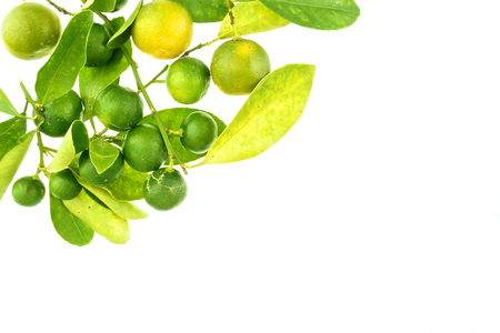 Group of green calamondin and leaf used instead of lemon isolated on white background  Stok Fotoğraf