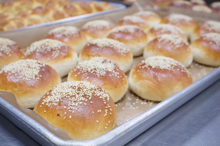 oven tray: Brown bread baked with white sesame on aluminium oven tray.