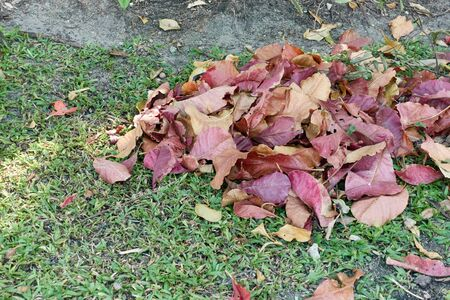 Close up pile colorful dry leaves on grass in garden as background. Cleaning works concept.