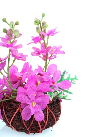 invents: orchids in pot on white background