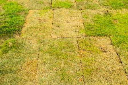 japanese garden: The japanese grass in the garden Stock Photo