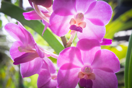 shipped: An orchid flower photographed in Chiang Mai, Thailand where they are grown in large quantities and shipped all over the world Stock Photo