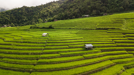Top view of the rice paddy fields in northern Thailand Stock Photo