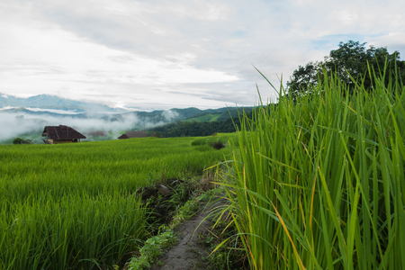 View of the rice paddy fields in northern Thailand