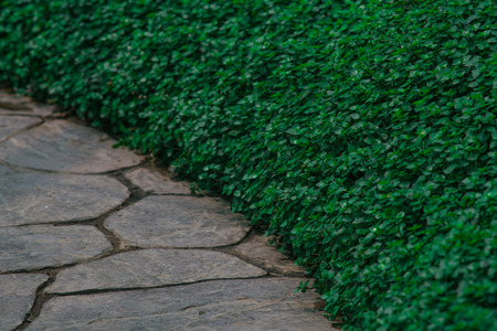 Creative layout made of green leaves, Nature concept Stock Photo