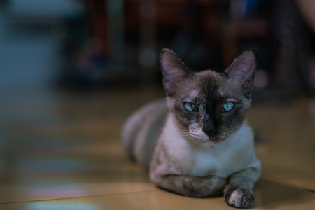 cat stay alone in the house, lonely  Stock Photo