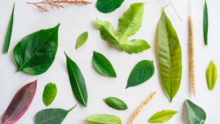 Creative layout made of green leaves, Nature concept, Creative flatlay  Stock Photo