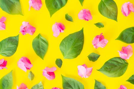 Flat lay Fresh bougainvillea flower isolated on yellow background Stock Photo